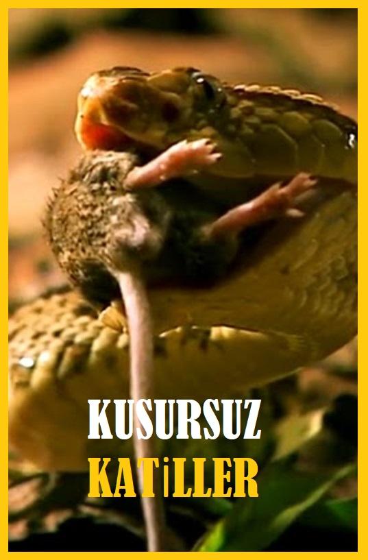 KUSURSUZ KATİLLER